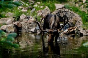Animals in Cheyenne Mountain Zoo, Denver